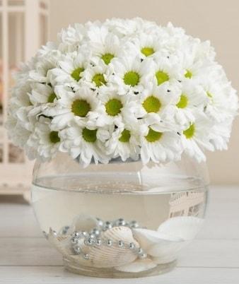 Fanusta beyaz Papatya  Bursa çiçekçi inegöl kaliteli taze ve ucuz çiçekler