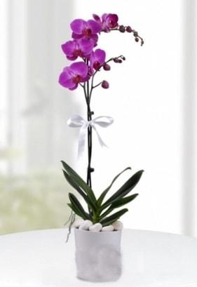 Tek dallı saksıda mor orkide çiçeği  Çiçekçi bursa çiçek firması