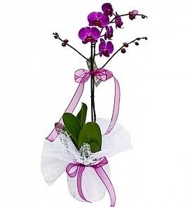 Tek dallı saksıda ithal mor orkide çiçeği  Çiçekçi bursa çiçek firması